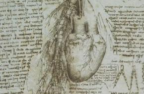 Leonardo Disegno anatomico